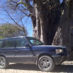 Range Rover By A Tree